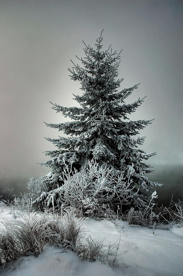 Majestic Winter Digital Art  - Majestic Winter Fine Art Print