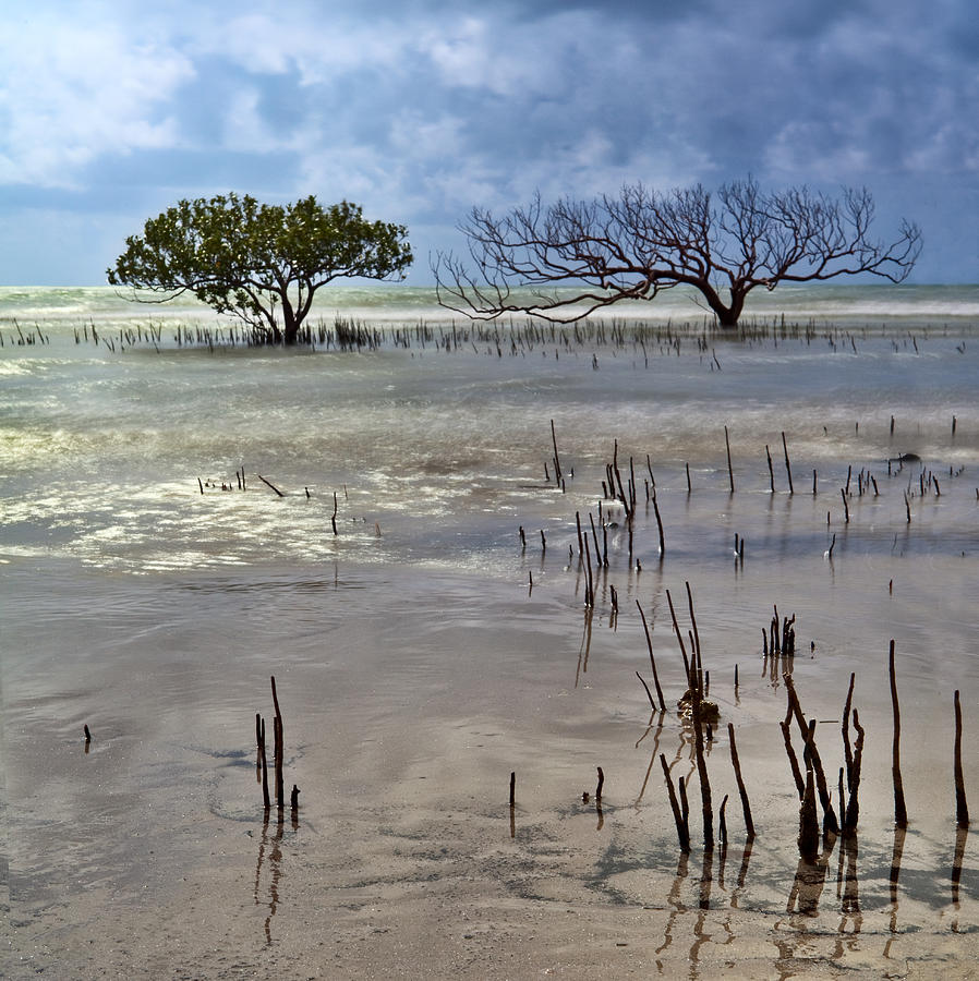 Mangrove Tree In Blurred Sea Photograph