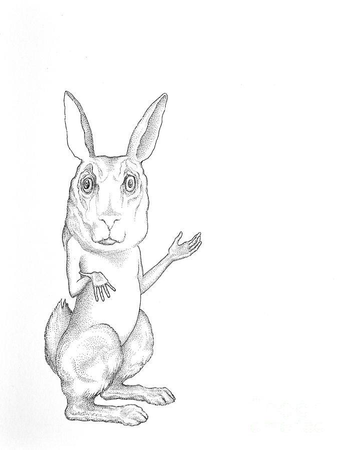 March Hare Drawing