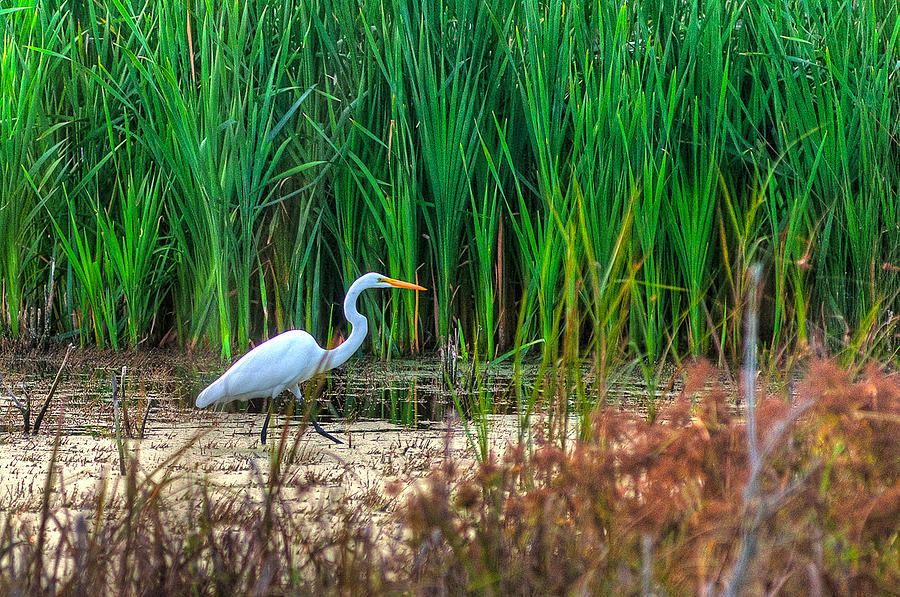 Marsh Hunter Photograph  - Marsh Hunter Fine Art Print