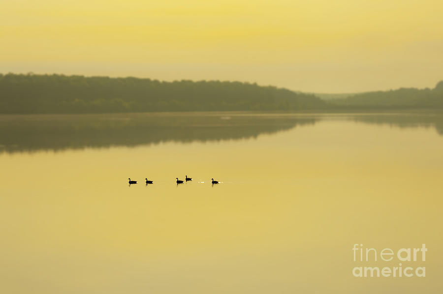 Misty Lake Photograph  - Misty Lake Fine Art Print