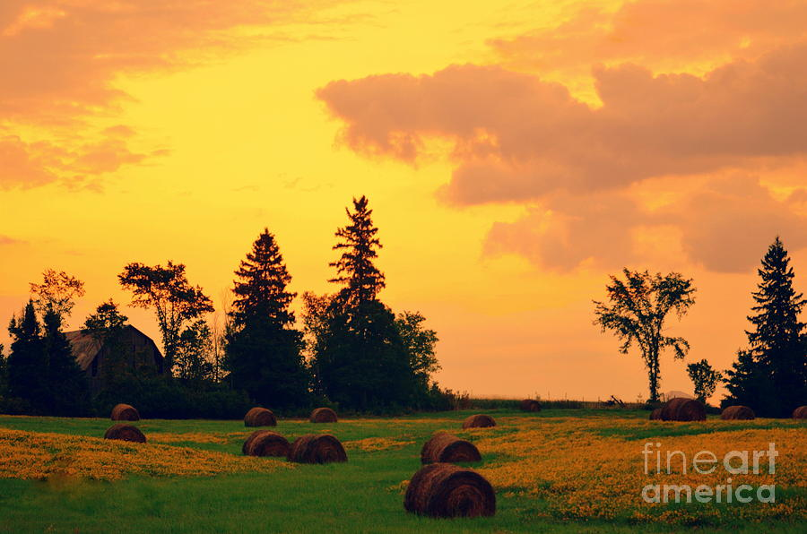 Morning  Has Broken Photograph  - Morning  Has Broken Fine Art Print