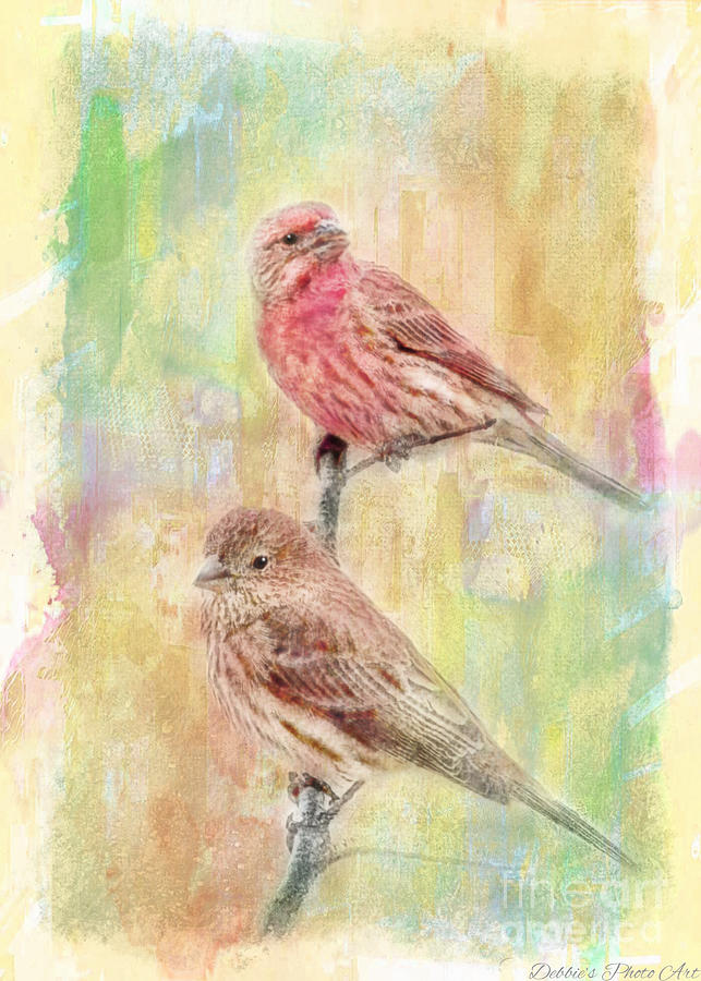 Mr And Mrs House Finch - Digital Paint Photograph