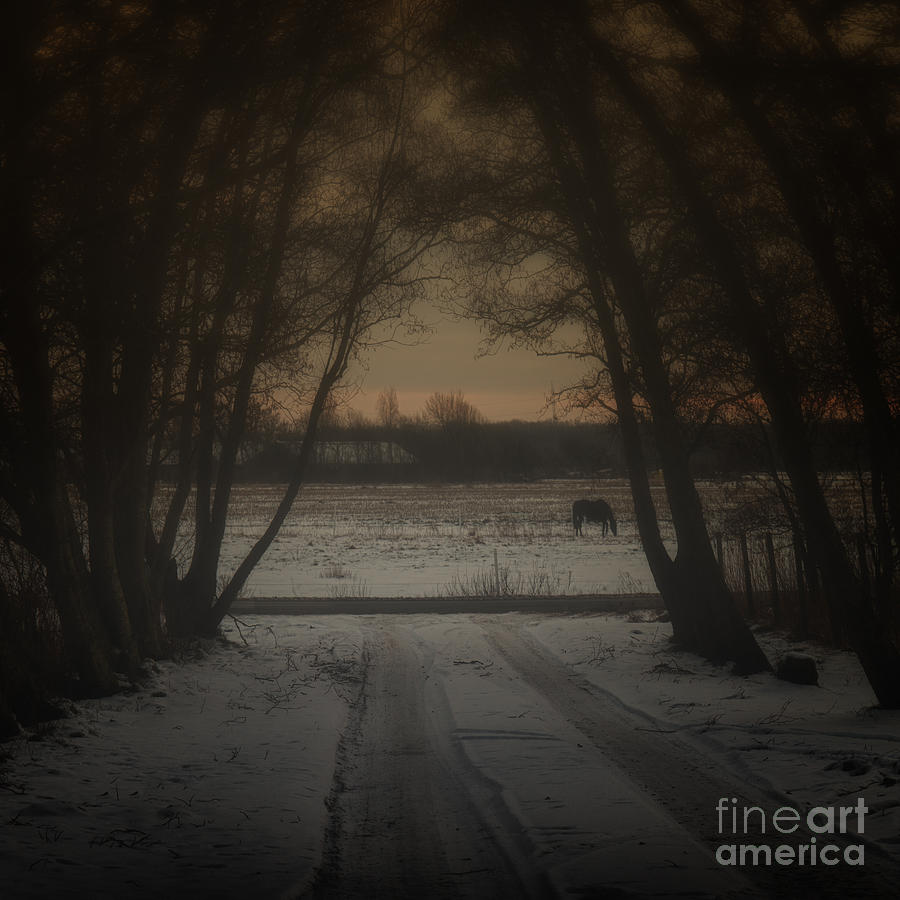 My Dark Forest Photograph  - My Dark Forest Fine Art Print