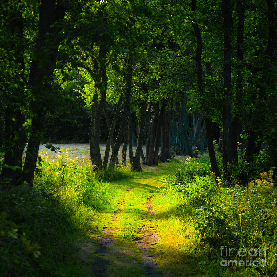 Old tree lined path is a photograph by kathleen smith which was