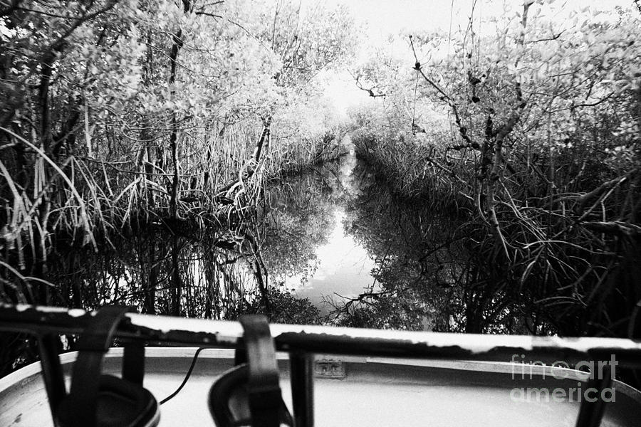 On Board An Airboat Ride Through A Mangrove Jungle In Everglades City Florida Everglades Usa Photograph