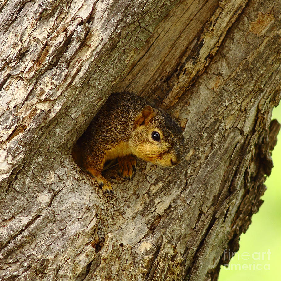 One Too Many Acorns Photograph