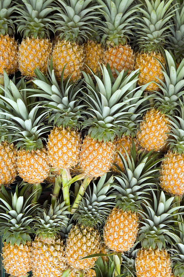 Organic Pineapple  Photograph