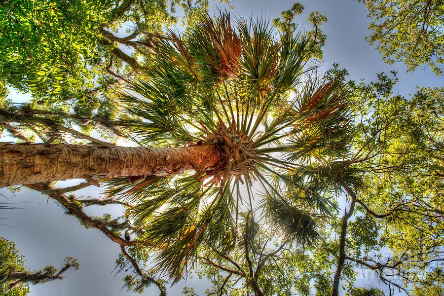Palm Splendor Photograph