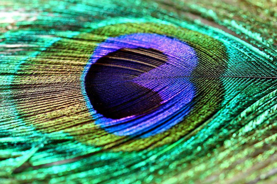 Peacock Feather Photograph - Peacock Feather by Heike Hultsch