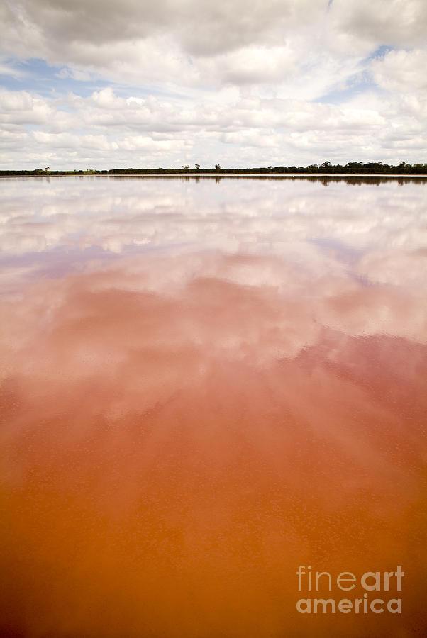 Pink Lake Photograph