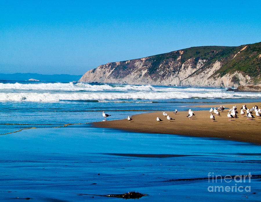 Pt Reyes National Seashore Photograph  - Pt Reyes National Seashore Fine Art Print