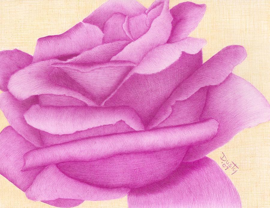 Pink Rose Drawing Purple Organdy Rose Drawing