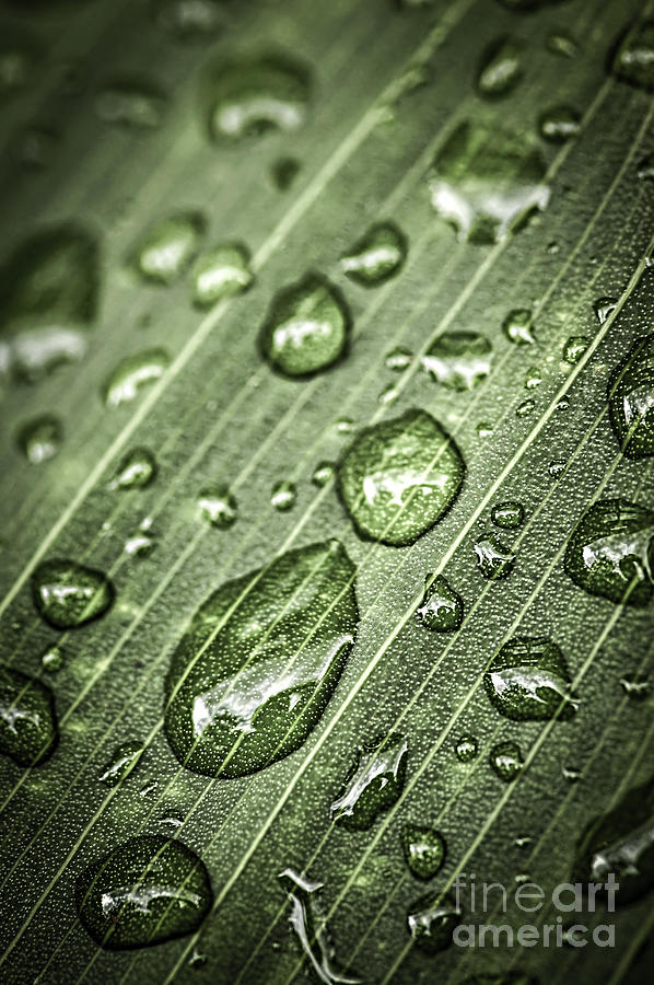 Raindrops On Green Leaf Photograph