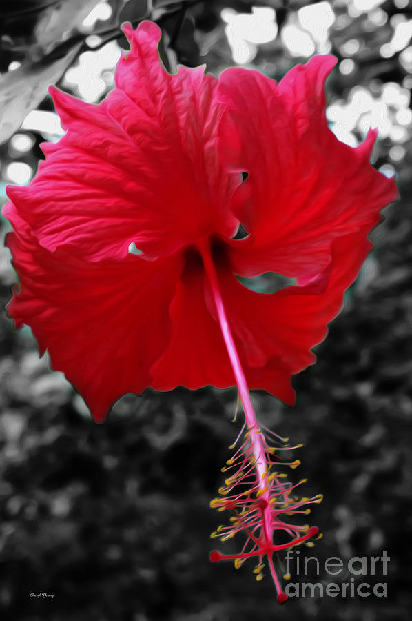 Red Hibiscus Digital Art