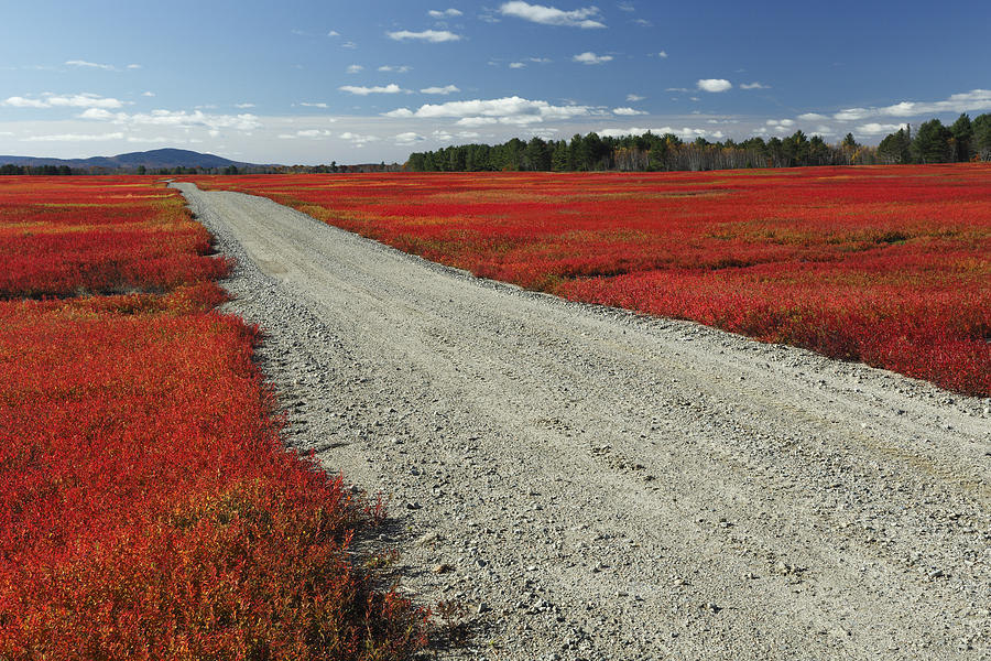 Feb0514 Photograph - Road Through Autumn Blueberry Maine by Scott Leslie