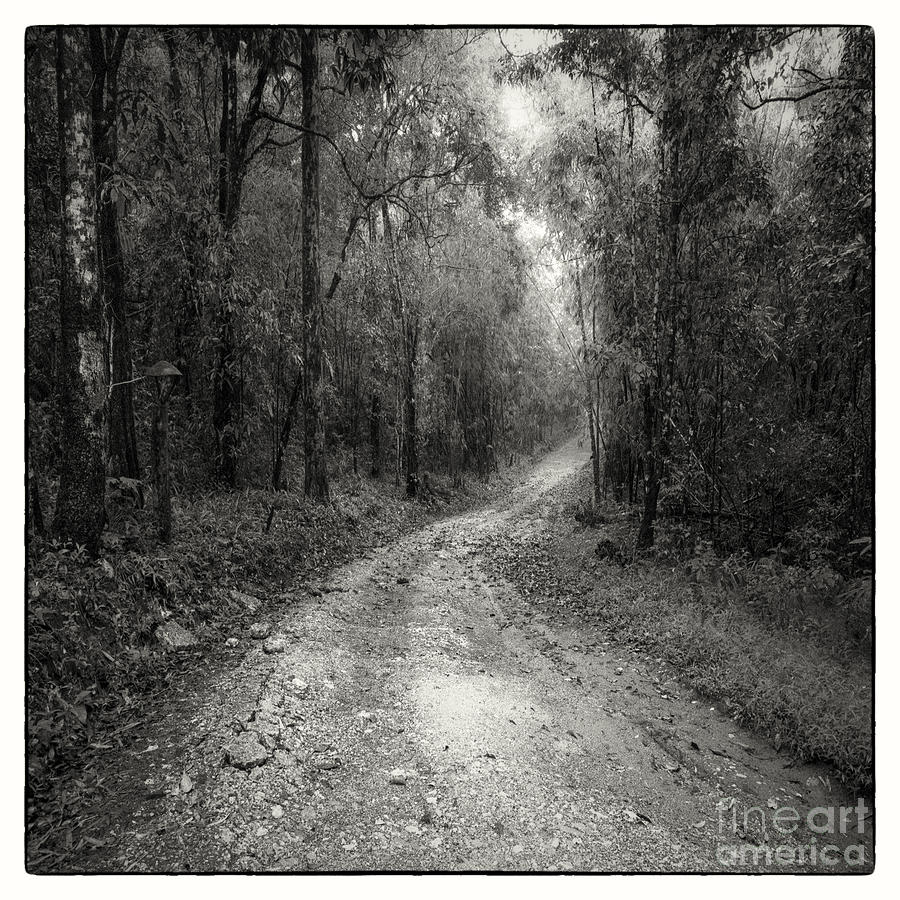 Road Way In Deep Forest Photograph  - Road Way In Deep Forest Fine Art Print