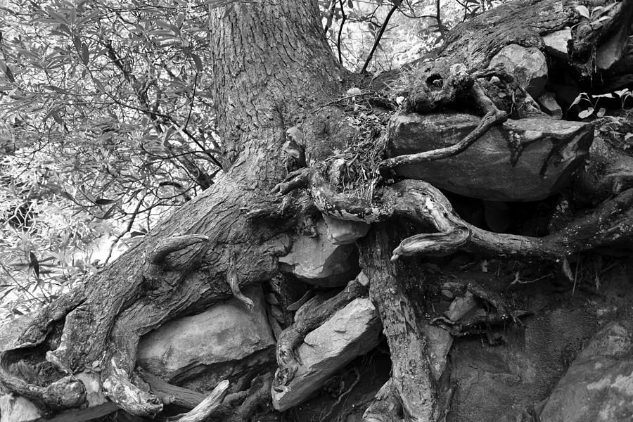 Roots Of Life Photograph