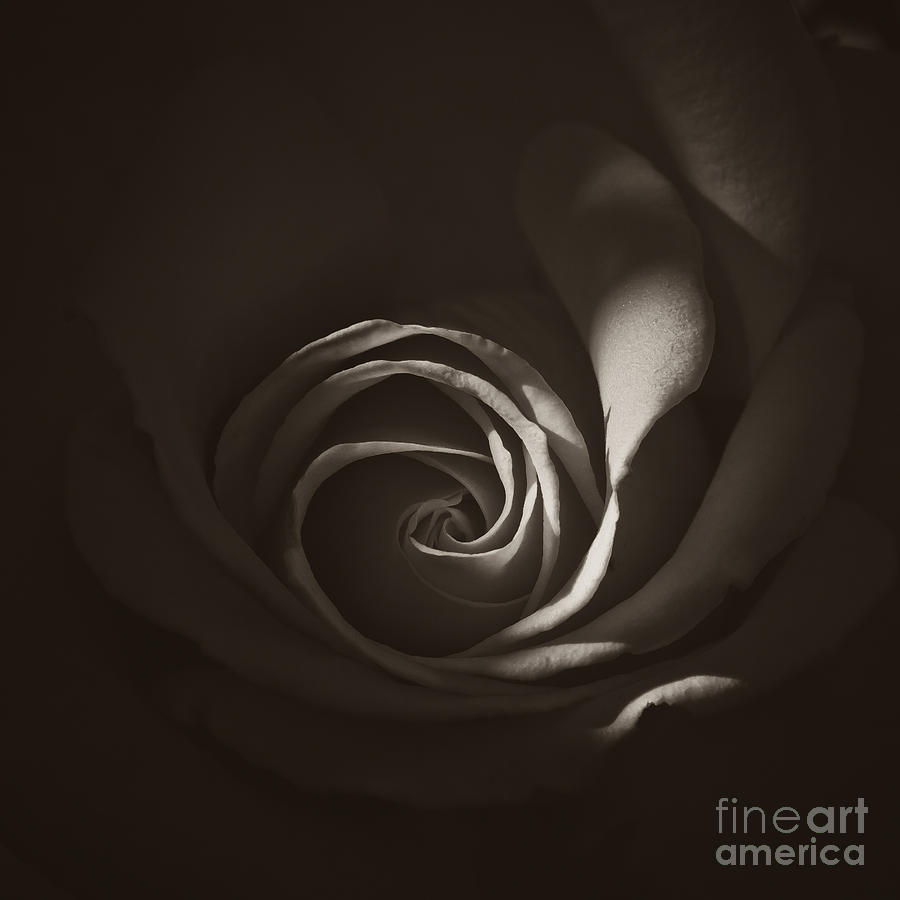 Rose By Another Name Photograph