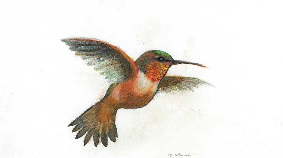 Rufous hummingbird drawing - photo#7
