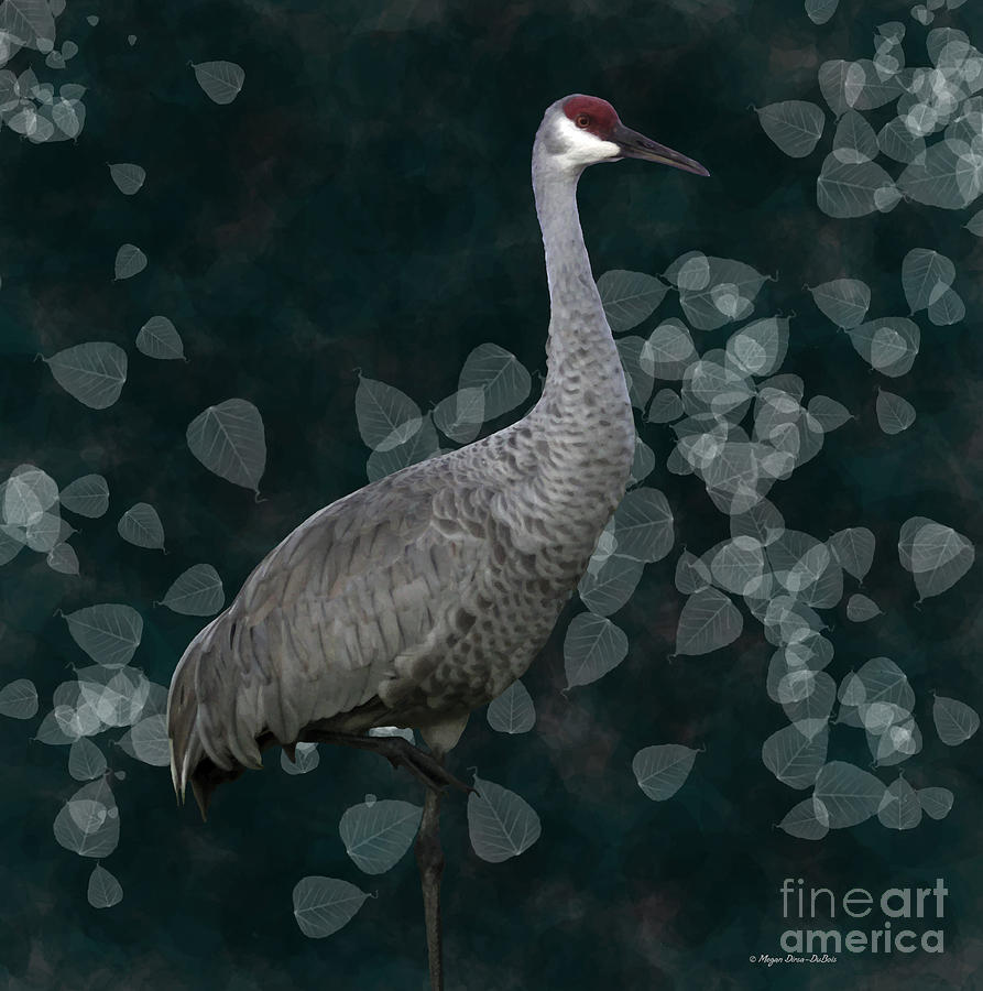 Sandhill Crane On Leaves Photograph
