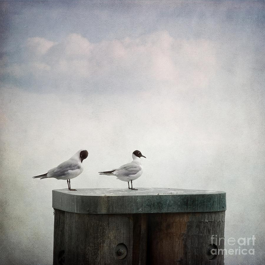 Bird Photograph - Seagulls by Priska Wettstein