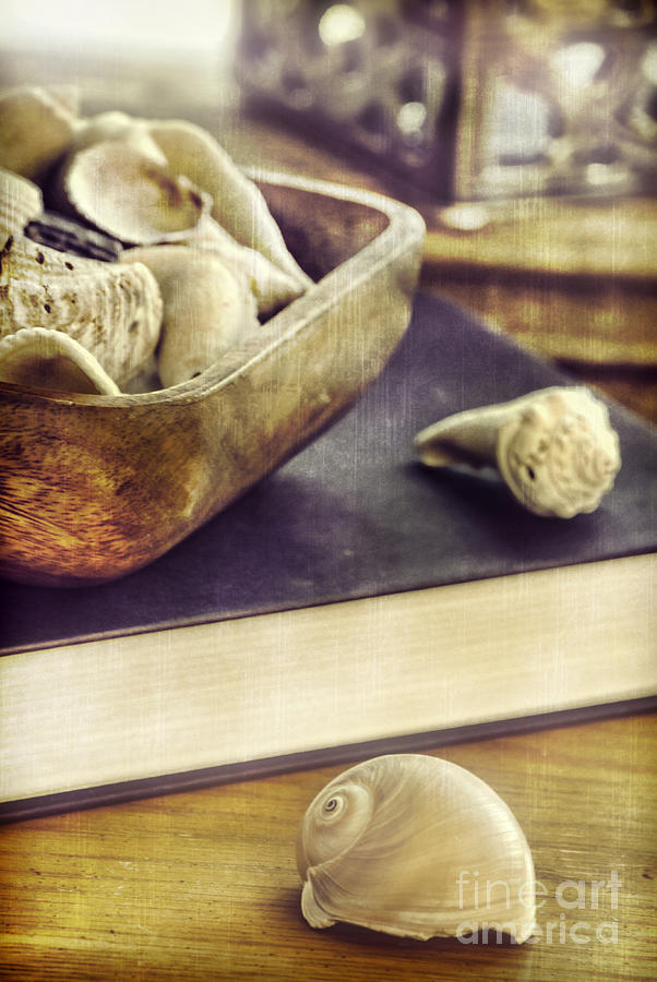 Still Life Photograph - Seashells by HD Connelly