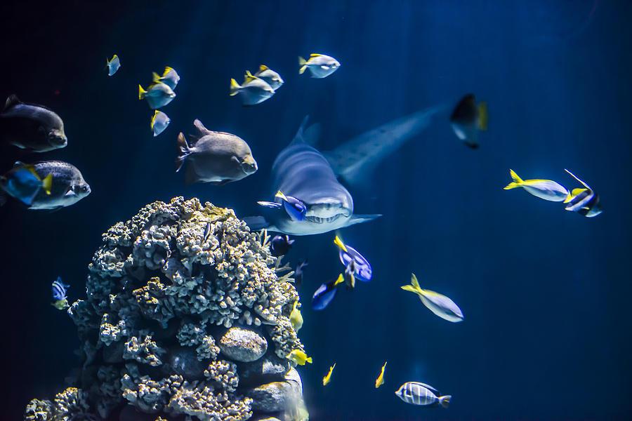 Shark Hunting Photograph