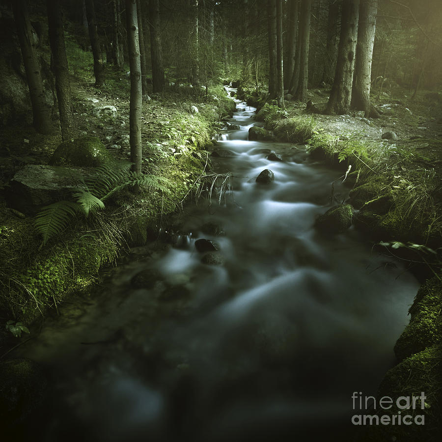 Bulgaria Photograph - Small Stream In A Forest, Pirin by Evgeny Kuklev
