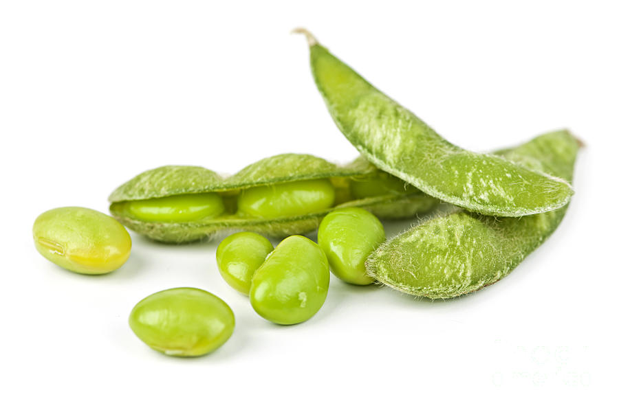 Soy Beans Photograph