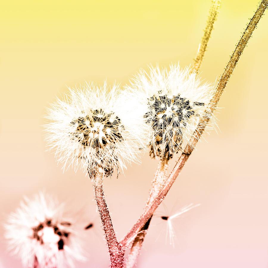 Spring Dandelion Mixed Media