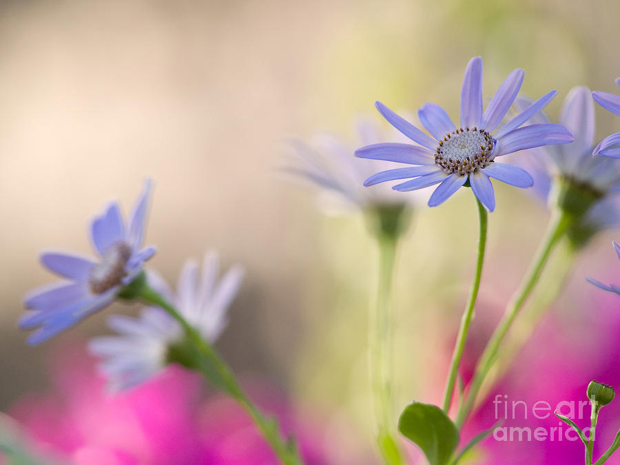 Spring Dreams Photograph  - Spring Dreams Fine Art Print