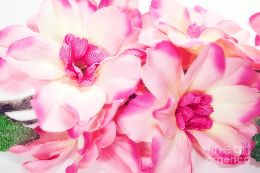 Anniversary Photograph - Spring Flowers  by Michal Bednarek