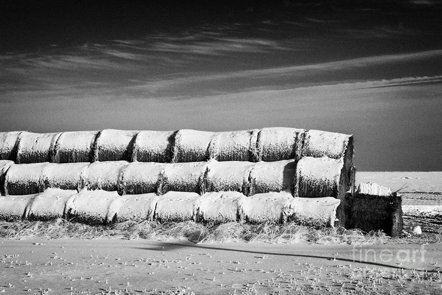 stack of frozen snow covered hay bales in a field Forget Saskatchewan Canada Photograph