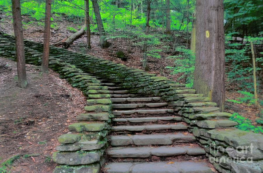 Stairway In The Woods Photograph