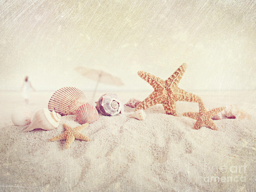 Starfish And Seashells At The Beach Photograph  - Starfish And Seashells At The Beach Fine Art Print