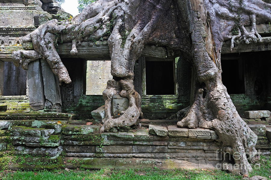 Strangler Fig Tree Roots On Preah Khan Temple Photograph
