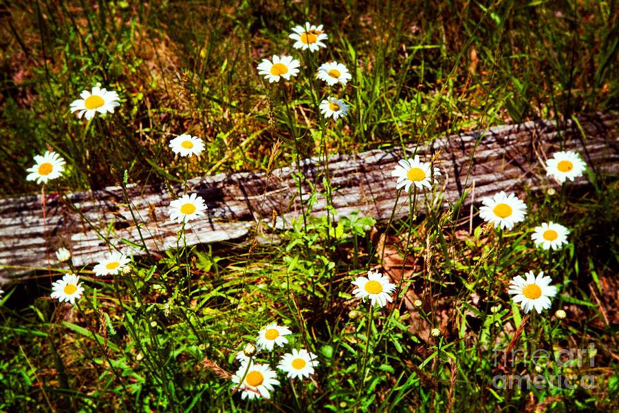 Blue Ridge Parkway Painting - Summer Flowers On The Blue Ridge Parkway 7653 by Dan Carmichael