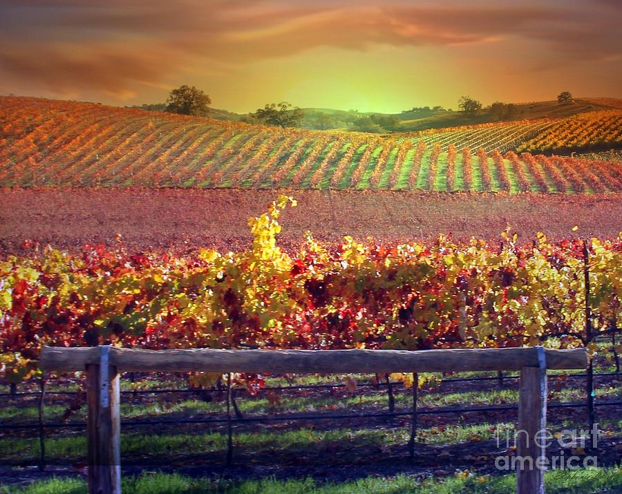 Sunrise Vineyard Photograph