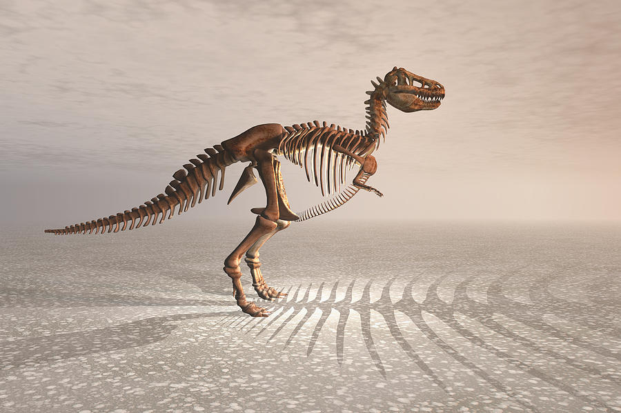 T. Rex Dinosaur Skeleton Digital Art  - T. Rex Dinosaur Skeleton Fine Art Print