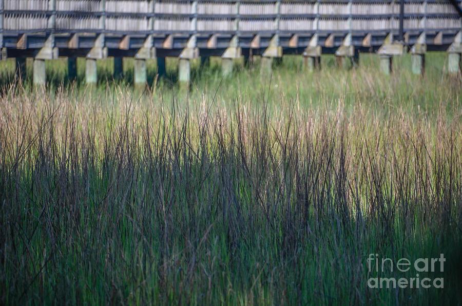 Lowcountry Tall Marsh Grass Photograph