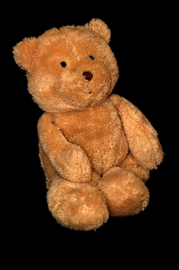 Teddy Bear  Photograph  - Teddy Bear  Fine Art Print