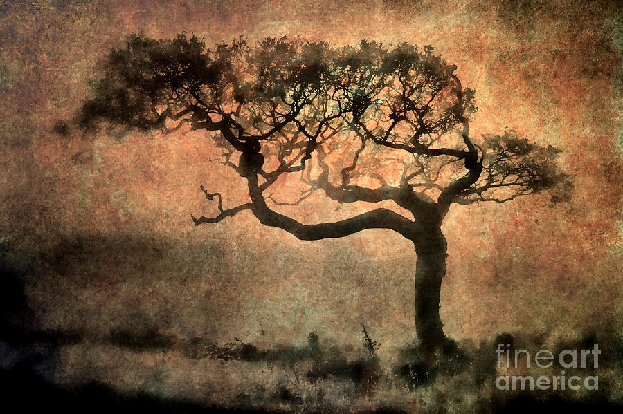 Textured Tree In The Mist Photograph