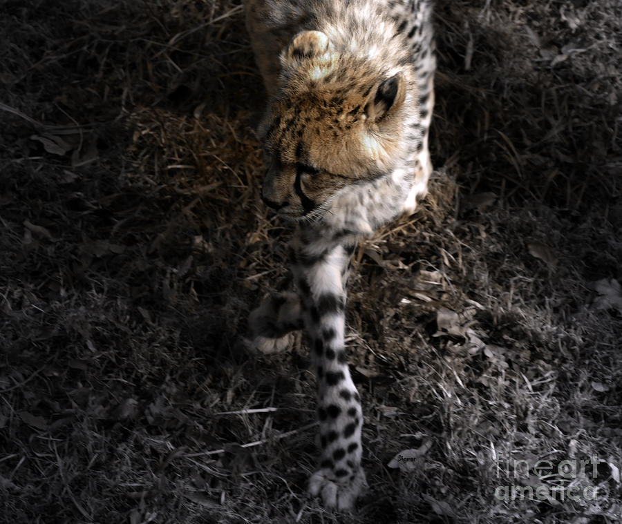 The Catwalk  Photograph  - The Catwalk  Fine Art Print