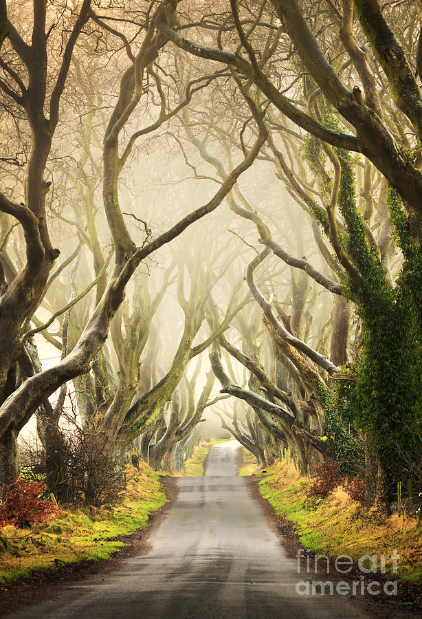 The Dark Hedges Photograph  - The Dark Hedges Fine Art Print
