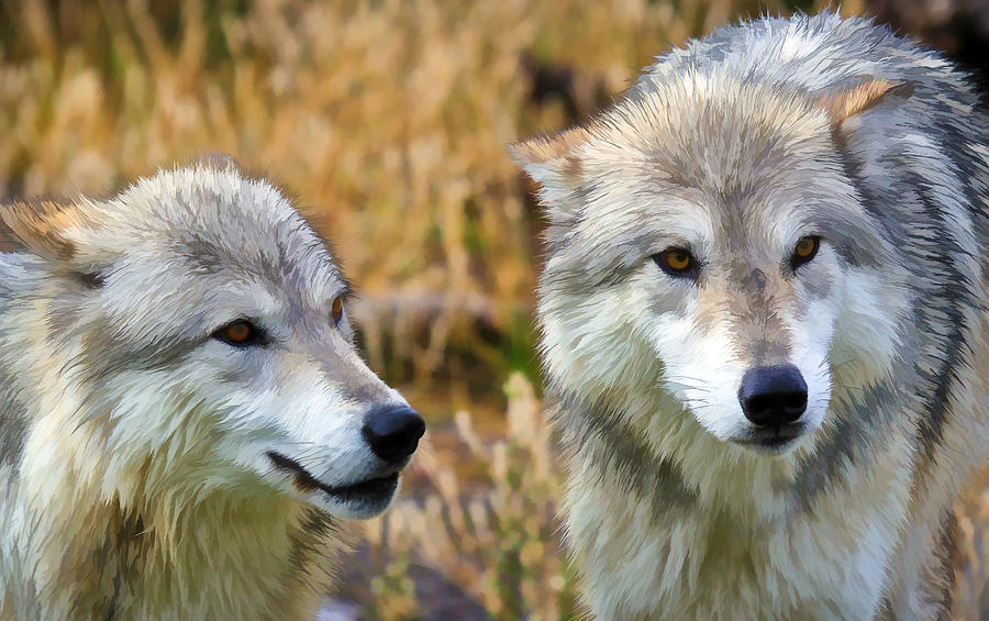 Wolves Photograph - The Eyes Have It by Athena Mckinzie