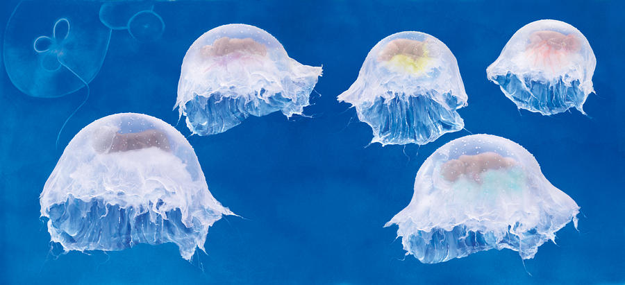 The Jellyfish Nursery Photograph