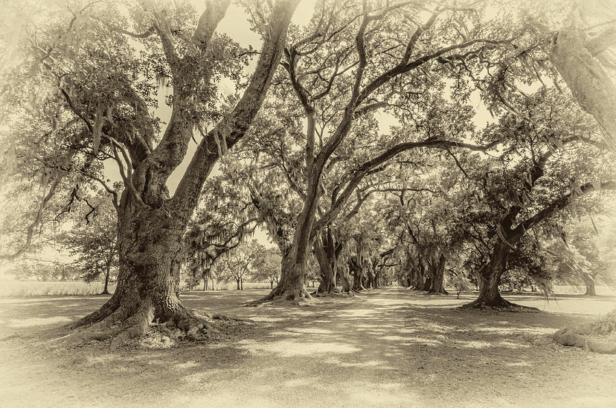 The Lane Sepia Photograph  - The Lane Sepia Fine Art Print