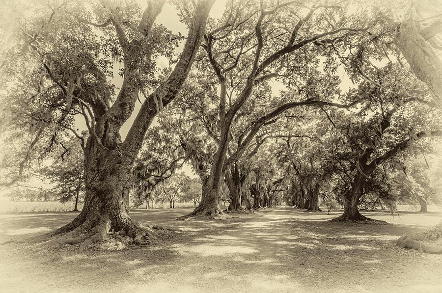The Lane Sepia Photograph