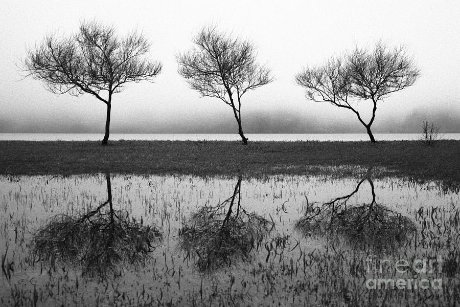 Three Trees Photograph